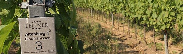 Weingarten Altenberg