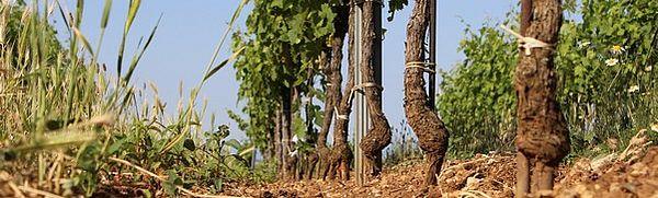 Weingarten Goldberg Boden