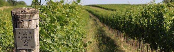 Weingarten Schafleiten